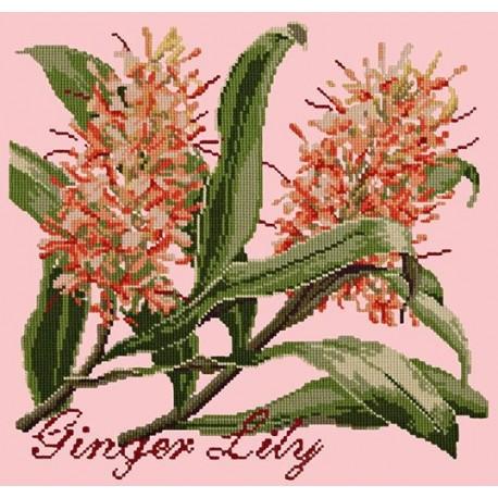 Elizabeth Bradley, Exotics, GINGER LILY - 16x16 pollici
