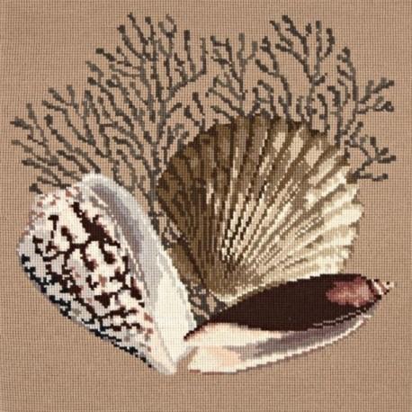 Elizabeth Bradley, Shells, FAN CORAL - 16x16 pollici