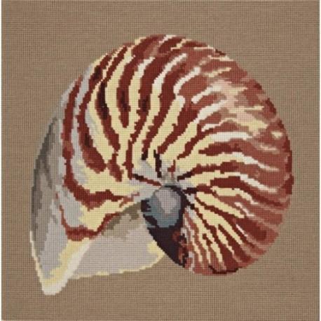 Elizabeth Bradley, Shells, NAUTILUS - 16x16 pollici