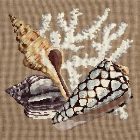 Elizabeth Bradley, Shells, STAGHORN - 16x16 pollici