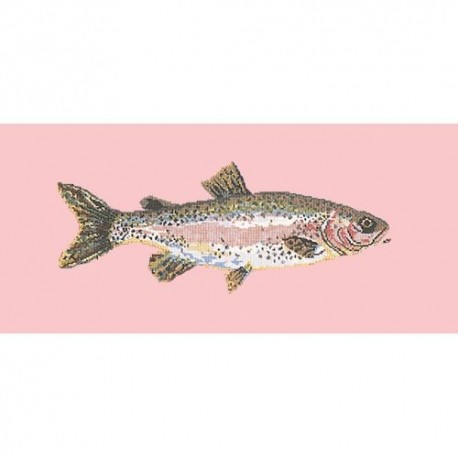 Elizabeth Bradley, The Fishes, RAIMBOW TROUT - 28x11 pollici