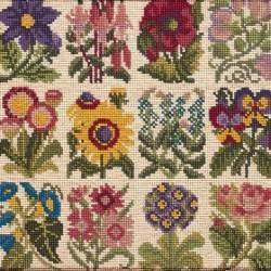 Elizabeth Bradley, Floribunda, COTTAGE GARDEN FAVOURITES - 12x12 pollici