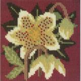 Elizabeth Bradley, Mini Kits, CHRISTMAS ROSE - 6x6 pollici