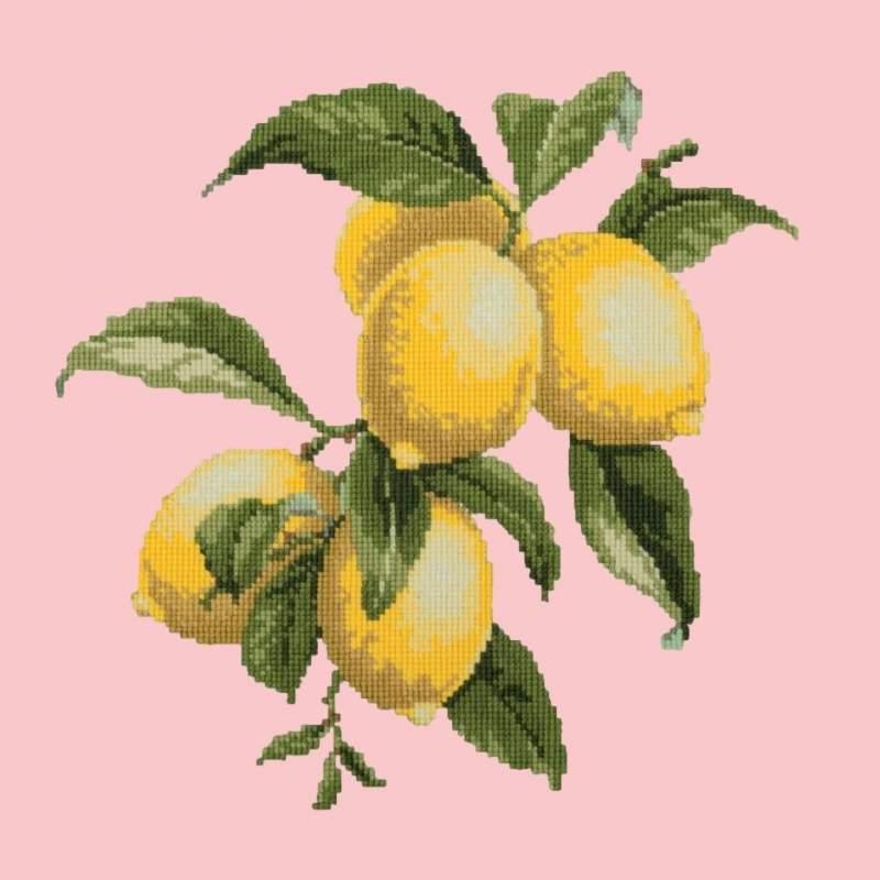 Elizabeth Bradley, Botanical Fruits, LEMONS - 16x16 pollici