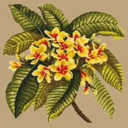 Elizabeth Bradley, Tropicals, FRANGIPANI - 16x16 pollici