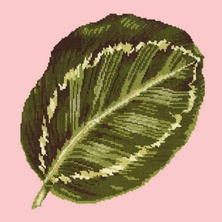 Elizabeth Bradley, Tropicals, CALATHEA LEAF - 16x16 pollici