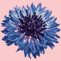 Elizabeth Bradley, Blooms, CORNFLOWER - 12x12 pollici