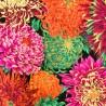 Tessuto Nero - Japanese Chrysanthemum by Phillip Jacobs