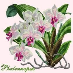 Elizabeth Bradley, Exotics, PHALAENOPSIS ORCHID - 16x16 pollici