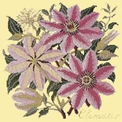 Elizabeth Bradley, Climbing Flower, CLEMATIS - 16x16 pollici