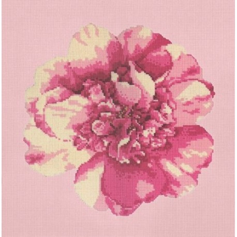 Elizabeth Bradley, Blooms, CAMELLIA BLOSSOM - 16x16 pollici