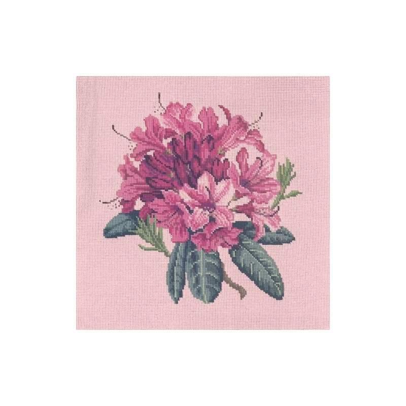 Elizabeth Bradley, Blooms, RHODODENDRON - 16x16 pollici