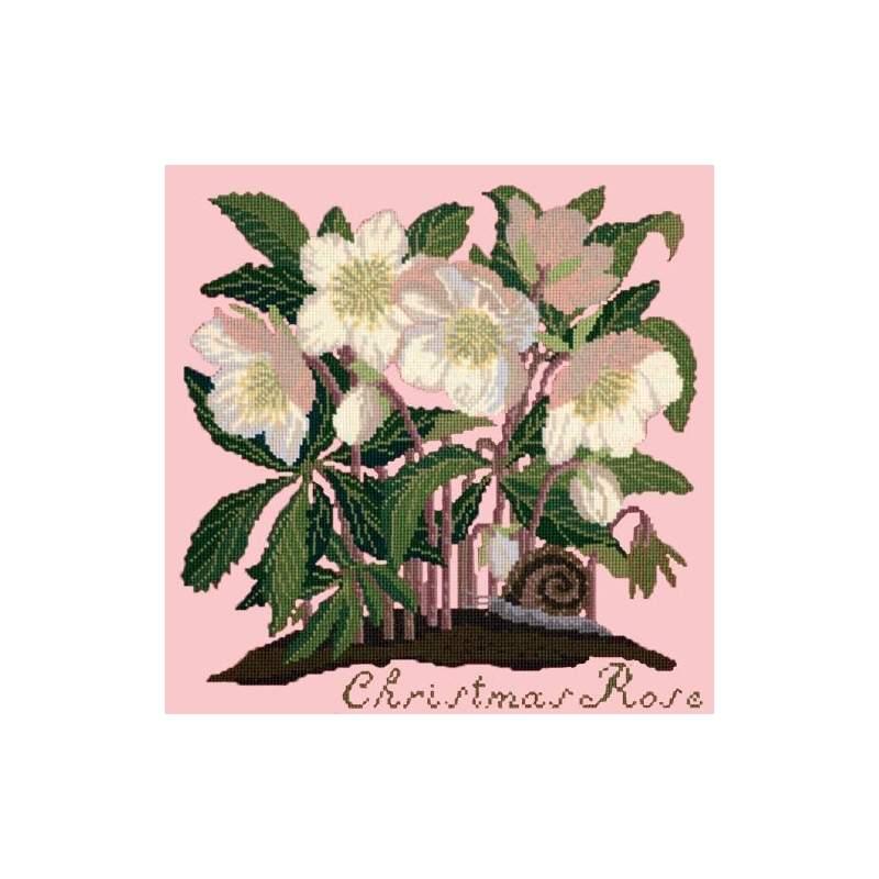 Elizabeth Bradley, Botanical Garden, CHRISTMAS ROSE - 16x16 pollici